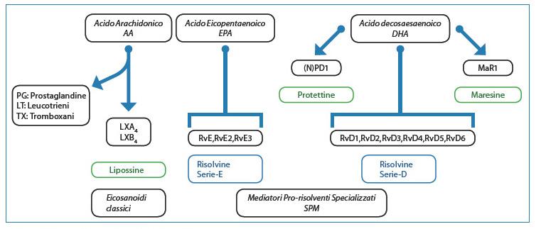Fig. 3. Biosintesi dei mediatori lipidici prorisolventi.